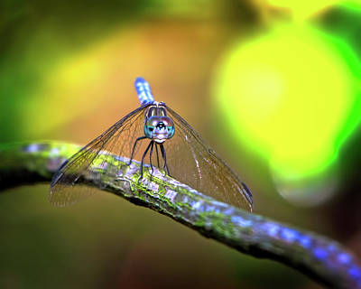 Clouds Rights Managed Images - Face of the Dragonfly Royalty-Free Image by Mark Andrew Thomas