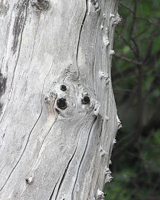 Photograph - Face Out Of Wood by Viktor Savchenko