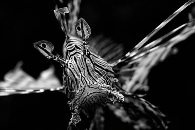 Aquatic Photograph - Face To Face by Rico Besserdich
