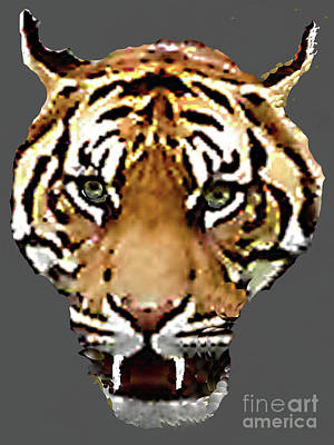 Photograph - Face-to-face With A Bengal Tiger  by Merton Allen