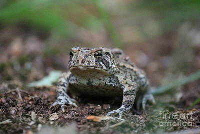 Photograph - Face To Face With A Fowler Toad  by Neal Eslinger