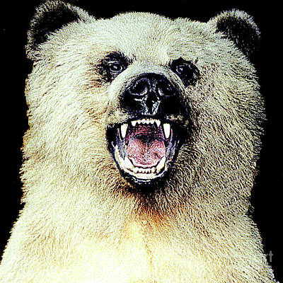 Photograph - Face-to-face With A Grizzly Bear - Anchorage Alaska by Merton Allen
