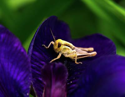 Face To Face With Grasshopper Art Print by Douglas Barnett