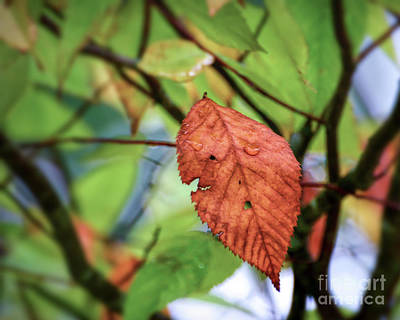 Photograph - Faces In The Leaf by Kerri Farley