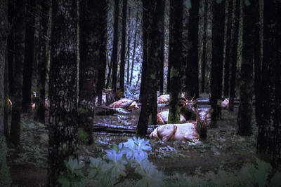 Photograph - Faces In The Woods Mod by Belinda Greb