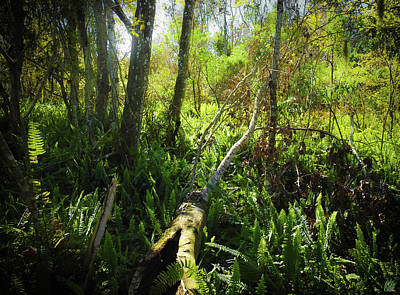 Photograph - Faces Of The Swamp, No. 1 by Elie Wolf