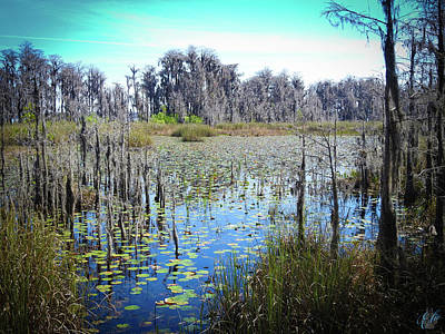 Photograph - Faces Of The Swamp, No. 8 by Elie Wolf