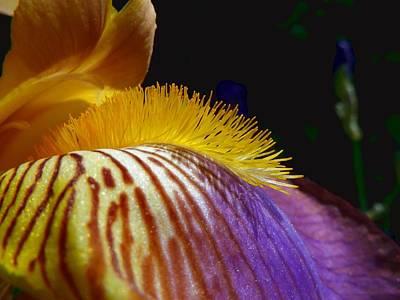Violett Photograph - Facet Of Iris by Eva Sing