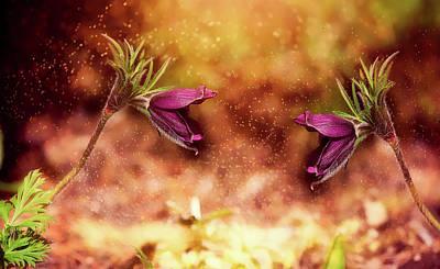 Photograph - Facing Anemones by Pezibear