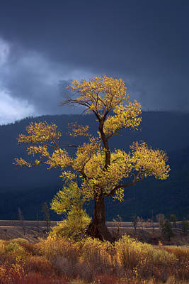 Metal Tree Photograph - Facing The Storm by Edgars Erglis