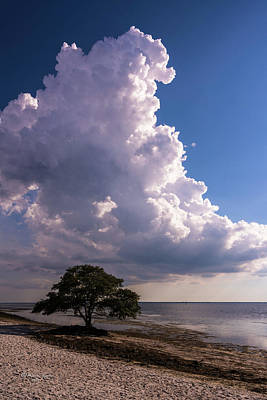 Forecast Photograph - Facing The Storm by Marvin Spates