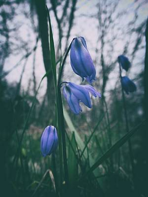 Photograph - Fade Into The Blue by Karen Stahlros