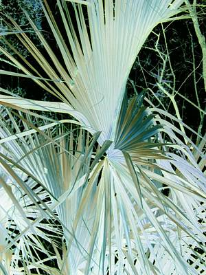 Photograph - Fade Out Fan by Florene Welebny