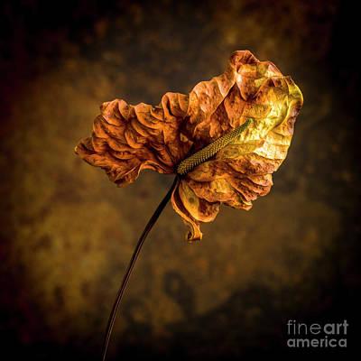 Colored Background Photograph - Faded Arum by Bernard Jaubert