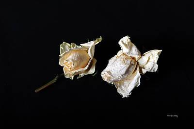 Photograph - Faded Beauty by Randi Grace Nilsberg