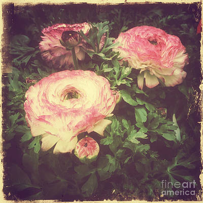 Photograph - Faded Beauty - Retro Pinks by Miriam Danar
