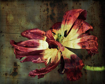 Photograph - Faded Elegance by Tatiana Travelways