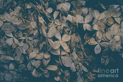 Photograph - Faded Flowers by Edward Fielding