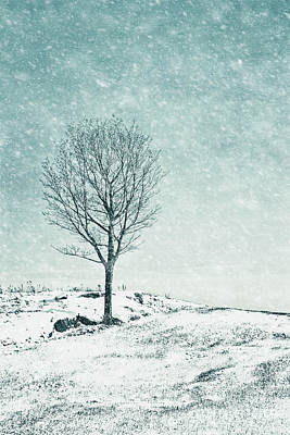 Photograph - Faded Into Winter by Evelina Kremsdorf