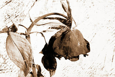 Photograph - Faded Love 5492.01 by M K Miller