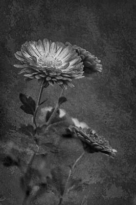 Photograph - Faded Momento by Elvira Pinkhas