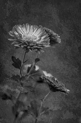 Photograph - Faded Momento by Elvira Pinkhas