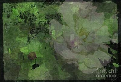Photograph - Faded Rose by Kathie Chicoine