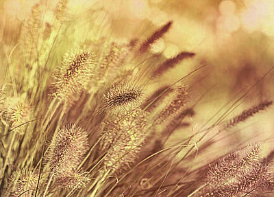 Photograph - Faded Summer by Georgiana Romanovna