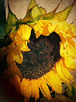 Photograph - Faded Sunflower by Shawna Rowe
