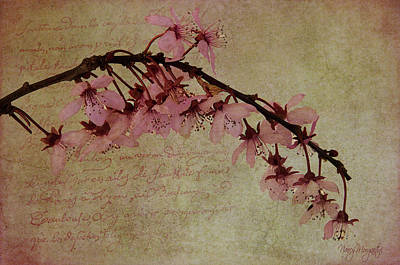 Photograph - Fading Blooms by Nancy Morgantini