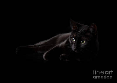 Photograph - Fading Into Shadows by Sari ONeal