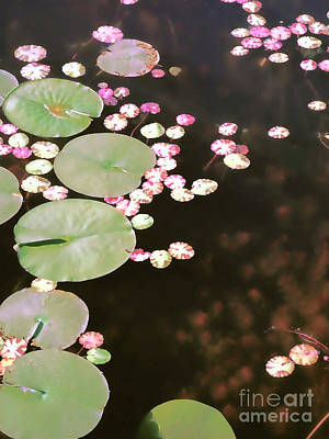 Photograph - Fading Lily Pads by Maria Janicki