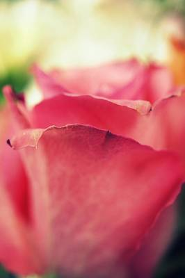 Photograph - Fading Petals by Laurie Perry
