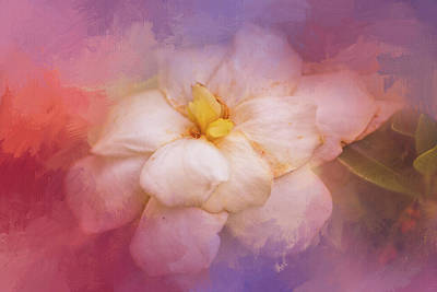 Photograph - Fading Summer Flower by Jai Johnson