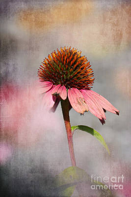 Photograph - Fading Summer by Jutta Maria Pusl