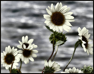 Art Print featuring the photograph Fading Sunflowers by Susan Kinney