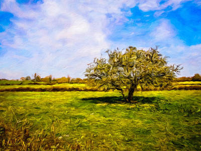 Photograph - Faerie Tree In Galway Meadow by James Truett