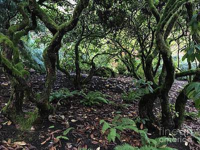Photograph - Faery Glen by Charlene Mitchell