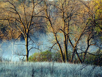 Photograph - Faerie Spring Morning by Wild Thing