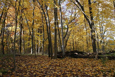 Photograph - Faint Autumn Merwin by Dylan Punke