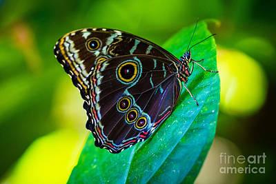 Fair Park Butterfly Art Print by Inge Johnsson