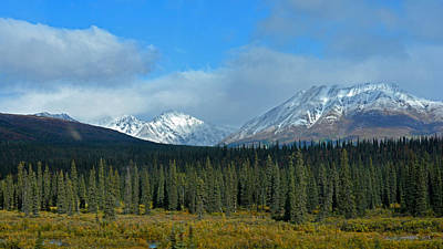 Photograph - Fairbanks To Denali. Along The Alaskan Highway by Connie Fox