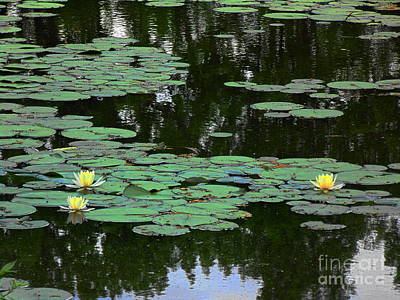 Painting - Fairmount Park Lily Pond by Daun Soden-Greene