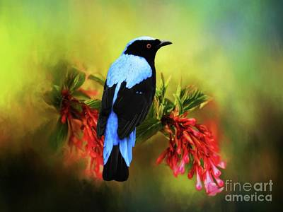 Digital Art - Fairy Bluebird by Suzanne Handel