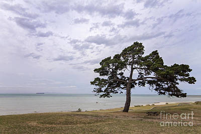 Photograph - Fairy Dell, Clifton Springs by Linda Lees