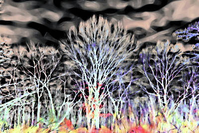 Photograph - Fairy Forest by Gina O'Brien