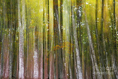 Fairy Forest I Art Print