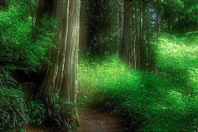 Fairy Forest Original by Kim Lessel