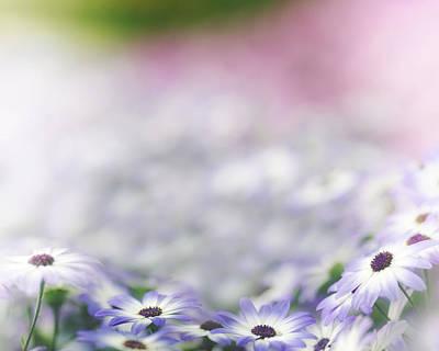 Photograph - Fairy Garden by Rebecca Cozart