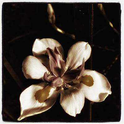 Art Print featuring the photograph Fairy Iris. A Butterfly Landed On My by Mr Photojimsf